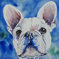 French bulldog, watercolour, giclee prints from original watercolour available, 17cm x 26cm at £30, please contact me if you would like a different size giclee print