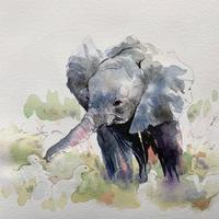 Baby Elephant- pen and watercolour