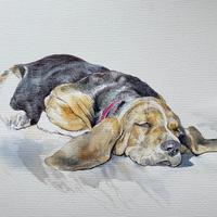 Sleeping Hound Dog - pen and watercolour