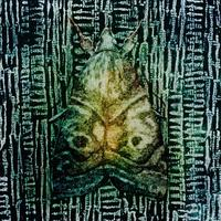 Collagraph:  'Green Moth'