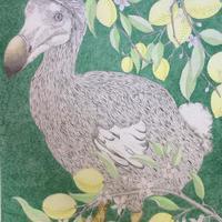 Botanical Dodo, pencil 76cm x 56cm, unframed. £80 including postage. Please enquire if interested in framed dodo.