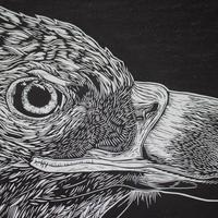 Detail from White tailed Eagle linocut print - limited edition