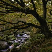 Autumn in Black Clough, Peak District