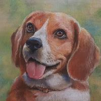 Mr Smee the Beagle in pastel