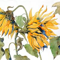 French sunflowers, watercolour