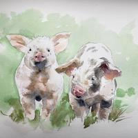 Two Pigs - pen and watercolour