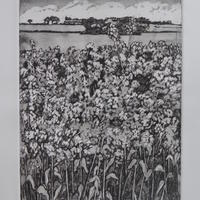 Distant Barn and Rape Fields Christine Hodges Etching and Aquatint