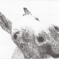 Dolly, pencil 76cm x 56cm, framed. £300. Mounted giclee prints available from £40.