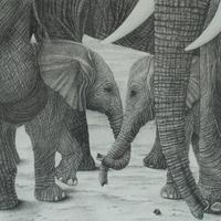 'Family Ties' is one of the most popular limited edition prints of my wildlife series, the original graphite drawing is still available.