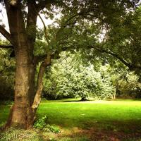 Spotlight on trees in Coundon Wedge in Coventry