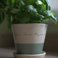 Herb planter *new product*