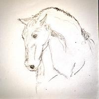 Horse sketch. Pencil Drawing.