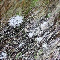 """""""Cotswold Meadow"""" - Acrylic on Canvas - 60cm x 60cm - £370"""