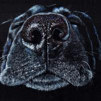 Labrador nose - Prismacolor pencils on black paper