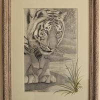 'Intrigue' is a graphite drawing and part of my wildlife series. I like to experiment with extending the image onto its mount which is something I have done here with this curious tiger.