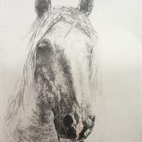 Jay, pencil 76cm x 56cm, framed £300, unframed £150. 50% to go to Redwings UK.
