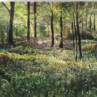 'Bluebells in Oakley Wood' - Carol Mackay
