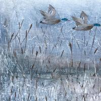 Mallards and Reeds, Bisham, W. Sussex,  Acrylic on fence fragment