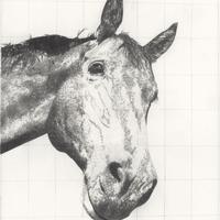 Monty, pencil 76cm x 56cm, framed £300, unframed £150