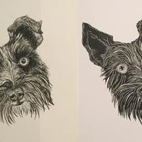 Poppy - commissioned drawing and linocut