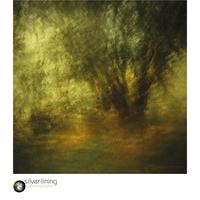 abstract image in woodland using ICM (Intentional Camera Movement) technique