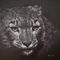 Snow Leopard - Grey scale prismacolor pencils on black paper. Finalist in Explorers against Extinction competition 2020