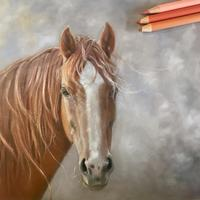 At Sunset; Study of an American Quarter Horse in Coloured pencil. 8x8''