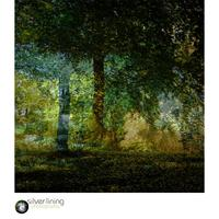Double exposure image of woodland made entirely in camera