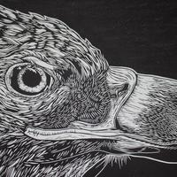 Detail from White Tailed Eagle limited edition linocut print