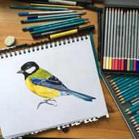 Great Tit - pencil crayon and pen drawing
