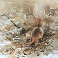 Red Squirrel - watercolour