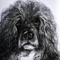 Brian The Great - Charcoal on Paper