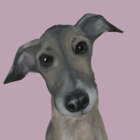 The Pink Whippet - Oil on Canvas