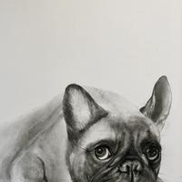 Pugged Out - Charcoal on Paper