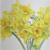 Narcissus - #remembering, framed giclée watercolour print on 310gsm museum paper