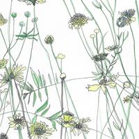 A4 watercolour and drawing of 'Walled garden yellow flowers'