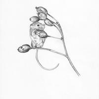 A4 pencil drawing of 'Harvest Mouse'