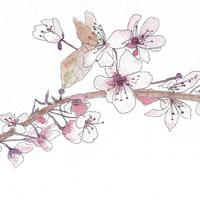 A5 watercolour drawing of Blossom 'Spring is coming'