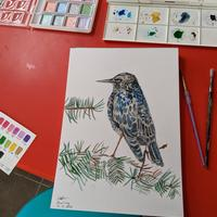 A4 watercolour drawing of 'Starling'
