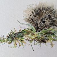 A5 watercolour drawing of 'Hedgehog'