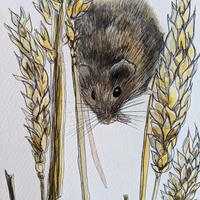"""7"""" x 5"""" watercolour drawing of 'Mouse'"""