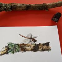 A4 watercolour and ink drawing of 'Dragonfly'