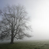 Clearing Mist