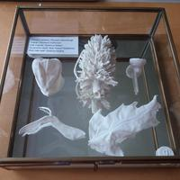 Collection of Porcelain seedheads in glass vitrine