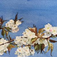 White Blossom, Blue Sky - original watercolour