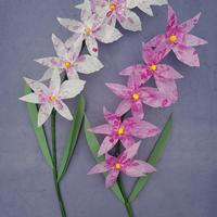 Orchids by Jeff Ting