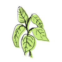 Digital illustration of a green house plant with black line drawing