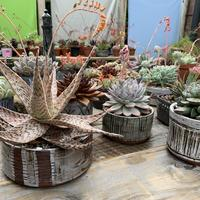 Range of pots and plants for indoors and outside
