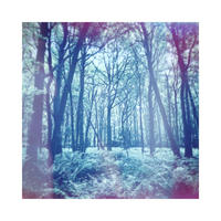 The woods - limited edition giclee print