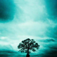 Solitude - silhouetted tree with dramatic sky - limited edition giclee print